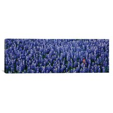 Panoramic Bluebonnet Flowers in a Field, Hill County, Texas Photographic Print on Canvas