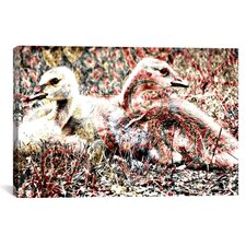 Baby Canadian Geese Graphic Art on Canvas