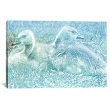 Baby Canadian Geese #3 Graphic Art on Canvas