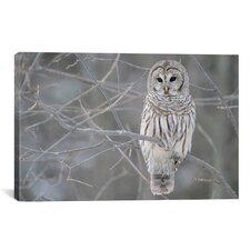 Barred Owl on Branches Photographic Print on Canvas