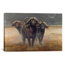 'Cape Buffalos' by Harro Maass Graphic Art on Canvas