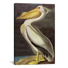 'American White Pelican' by John James Audubon Painting Print on Canvas