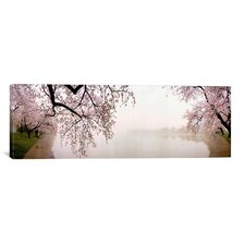 Panoramic Cherry Blossoms at the Lakeside, Washington, D.C Photographic Print on Canvas