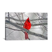 Cardinal Bird Photographic Print on Canvas