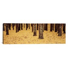 Panoramic Low Section View of Pine and Oak Trees, Cape Cod, Massachusetts Photographic Print on Canvas