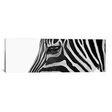 Panoramic 'Ignoring Zebra' by Bob Larson Photographic Print on Canvas