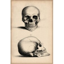 Cartography 'Human Skull Engraving' by William Miller Graphic Art on Canvas