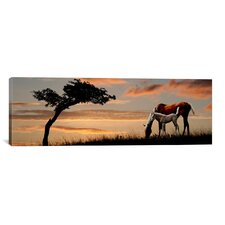 Panoramic Horse Mare and a Foal Grazing by Tree at Sunset Photographic Print on Canvas
