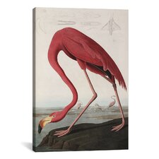 'Flamingo Drinking at Water's Edge' by John James Audubon Painting Print on Canvas