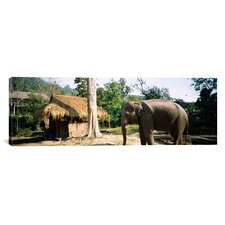 Panoramic Elephant Standing Outside a Hut in a Village, Chiang Mai, Thailand Photographic Print on Canvas