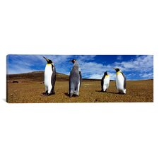 Panoramic Four King Penguins, Falkland Islands Photographic Print on Canvas