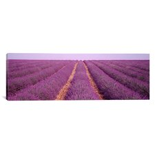 Panoramic France, View of Rows of Blossoms in a Field Photographic Print on Canvas