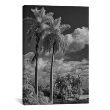 'Eleven Palms' by Geoffrey Ansel Agrons Photographic Print on Canvas