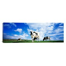 Panoramic Cows in Field England, United Kingdom Photographic Print on Canvas