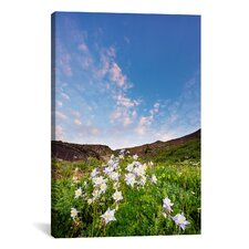 'Columbine Morning I' by Dan Ballard Photographic Print on Canvas