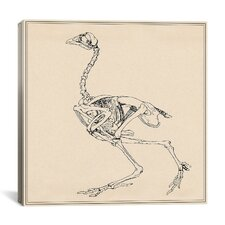"""Dorking Hen Skeleton"" Canvas Wall Art by George Stubbs"