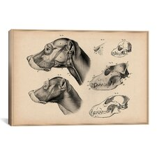 Animal Art 'Dog Anatomy Head' by Wilhelm Ellenberger and Hermann Baum Painting Print  on Canvas