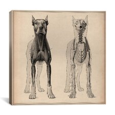 """Dog Anatomy Skeleton Front View"" Canvas Wall Art by Wilhelm Ellenberger and Hermann Baum"