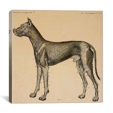 """Dog's Anatomy: Anatomy of Lymph Vessels in Dog"" Canvas Wall Art by Hermann Baum"