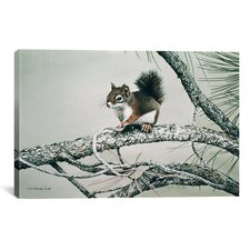'Red Squirrel' by Ron Parker Photographic Print on Canvas
