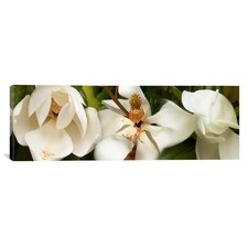 Panoramic Close-up of Magnolia Flowers Photographic Print on Canvas