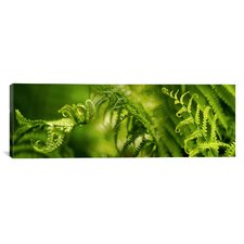 Panoramic Close-up of Multiple Images of Ferns Photographic Print on Canvas