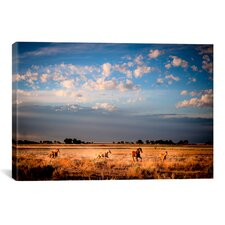 Open Spaces by Dan Ballard Photographic Print on Canvas