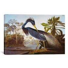 'Louisiana Heron from Birds of America' by John James Audubon Painting Print on Canvas
