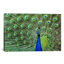 'Photography Peacock Feathers' Graphic Art on Canvas