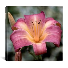 """Pink Flowers"" Canvas Wall Art by Harold Silverman"