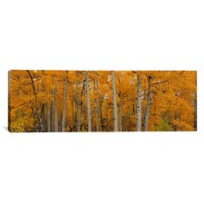 Panoramic Quaking Aspens Dixie National Forest, Utah Photographic Print on Canvas