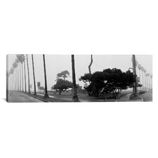 Panoramic Palm Trees and Fog, San Diego, California Photographic Print on Canvas