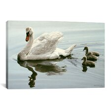 'Mute Swan and Three Cygnets' by Ron Parker Photographic Print on Canvas