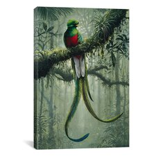 Resplendent Quetzal 2 by Harro Maass Photographic Print on Canvas