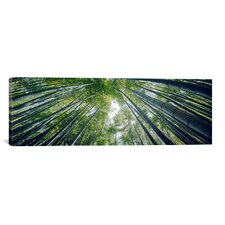 Panoramic 'Hokokuji Temple, Honshu, Japan' Photographic Print on Canvas