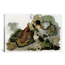'Ruffed Grouse' by John James Audubon Painting Print on Canvas