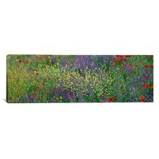 Panoramic Wildflowers El Escorial Spain Photographic Print on Canvas