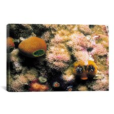 Marine and Ocean 'Spiral Coral' Photographic Print on Canvas