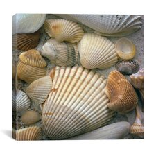 """Sea Shells"" Canvas Wall Art by J.D. McFarlan"