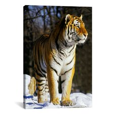 Photography Tiger Graphic Art on Canvas