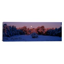Panoramic Snow Covered Forest at Dawn, Denver, Colorado Photographic Print on Canvas