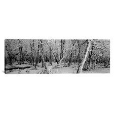 Panoramic Snow Covered Trees in a Forest, Alberta, Canada Photographic Print on Canvas
