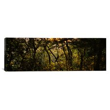Panoramic Sunset over a Forest, Monteverde Cloud Forest, Costa Rica Photographic Print on Canvas