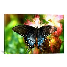 Photography Swallowtail Butterfly Photographic Print on Canvas