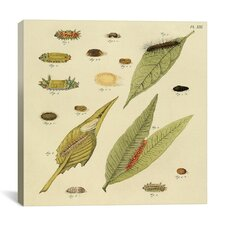 """""""Supplement Plate 21"""" Canvas Wall Art by Cramer and Stoll"""