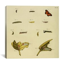 """""""Supplement Plate 4"""" Canvas Wall Art by Cramer and Stoll"""