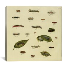 """""""Supplement Plate 23"""" Canvas Wall Art by Cramer and Stoll"""
