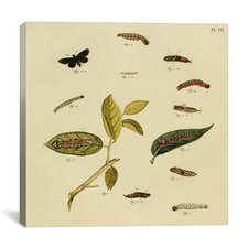 """""""Supplement Plate 7"""" Canvas Wall Art by Cramer and Stoll"""