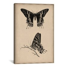 Animal Art Vintage Butterfly Scientific Drawing Painting Print on Canvas