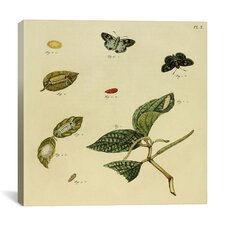 """""""Supplement Plate 10"""" Canvas Wall Art by Cramer and Stoll"""